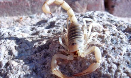 5 Tips for what to do when you find a Scorpion in your House